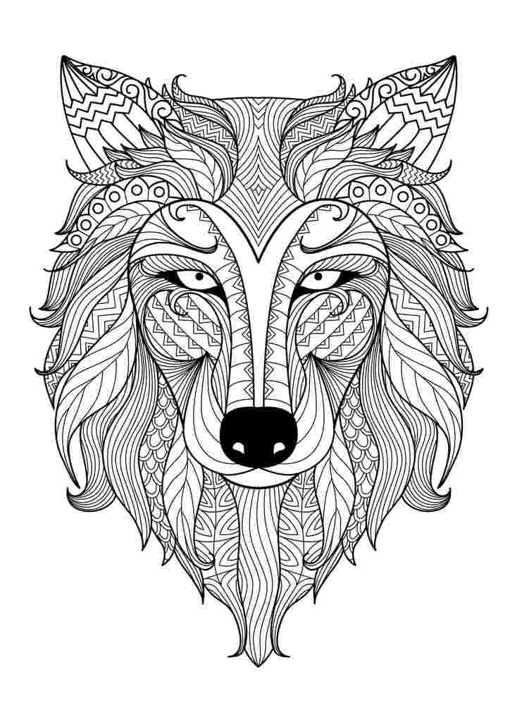 coloring pages for wolf big wolf head simple wolves adult