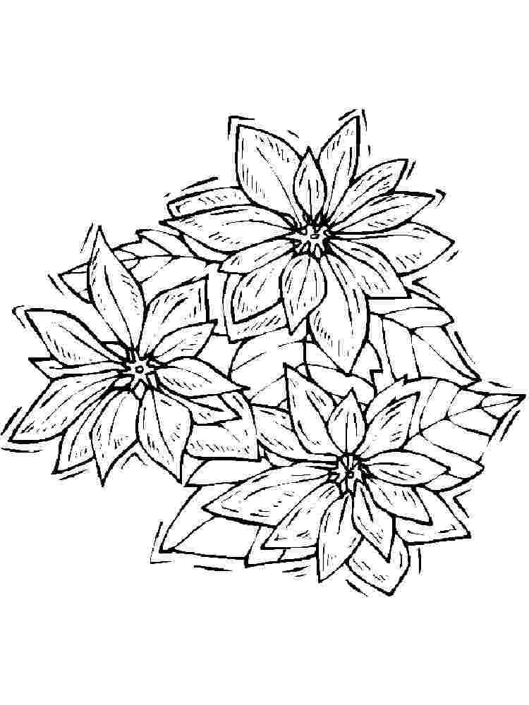 Coloring Pages Poinsettia Flower Coloring Pages For Kids