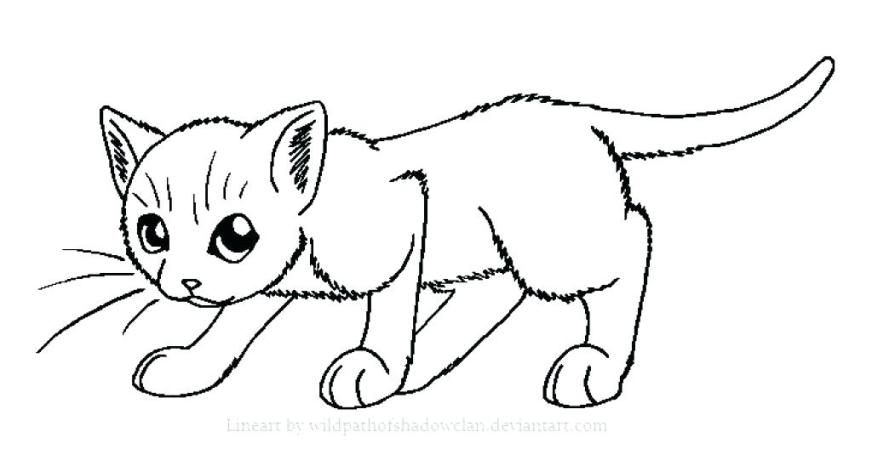 coloring pages realistic cat