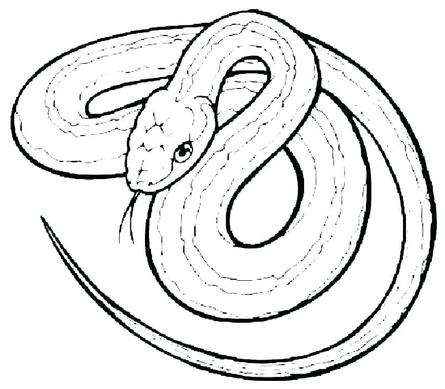 coloring pages snakes lego ninjago augosportsclub