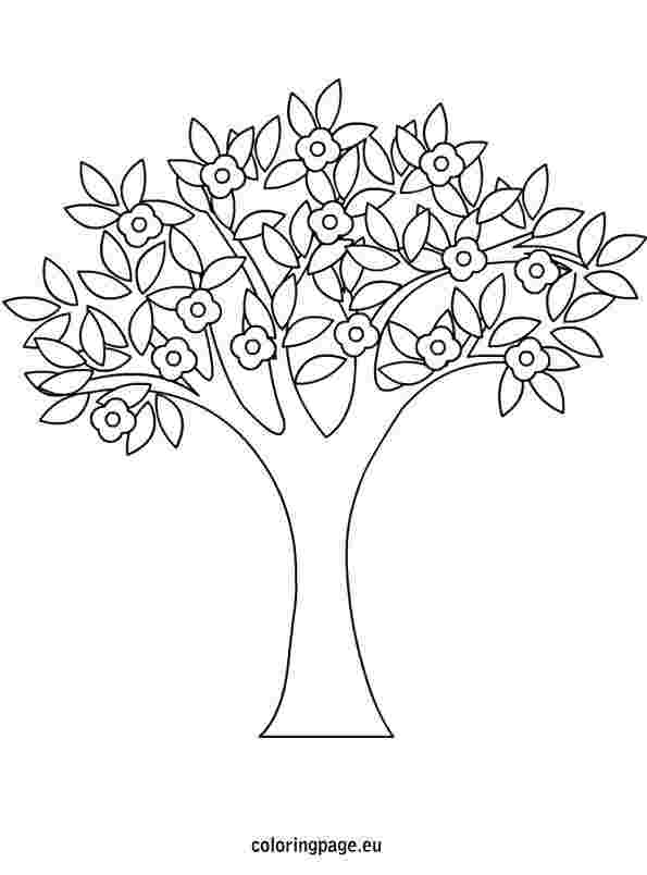 coloring pages spring tree trees coloring pages spring tree