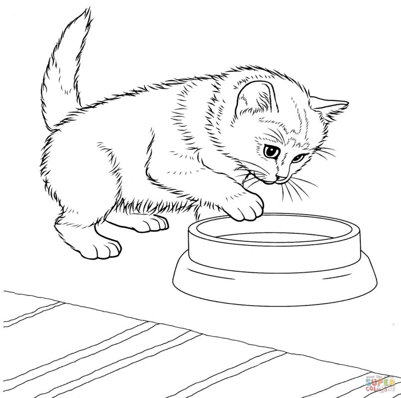 - Kitten Coloring Pages Picture - Whitesbelfast
