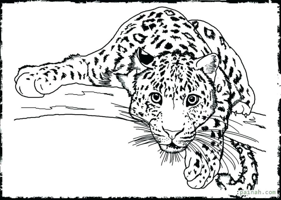 coloring pictures for adults animals pusat hobi