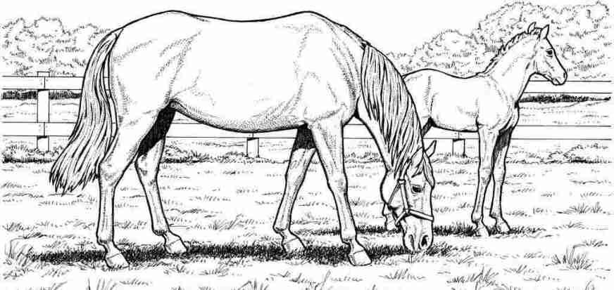 coloring sheets horses printable printable horseland