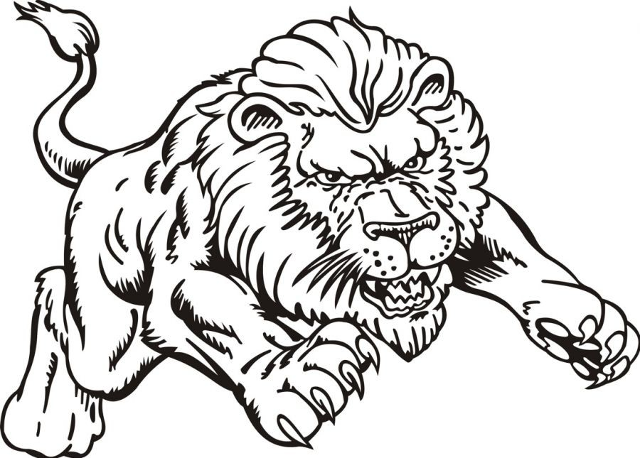 colouring pages lion pusat hobi