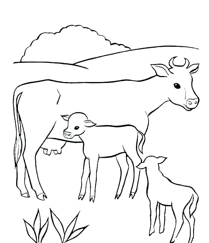 cows coloring pages cow free page pictures of animals