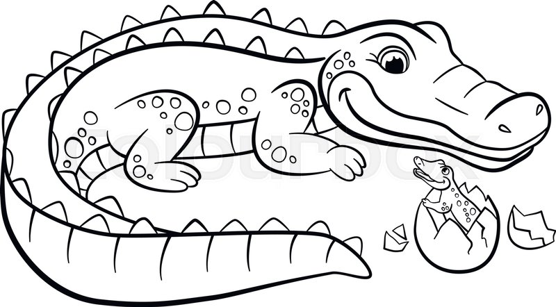 crocodile coloring pages at getdrawings free for