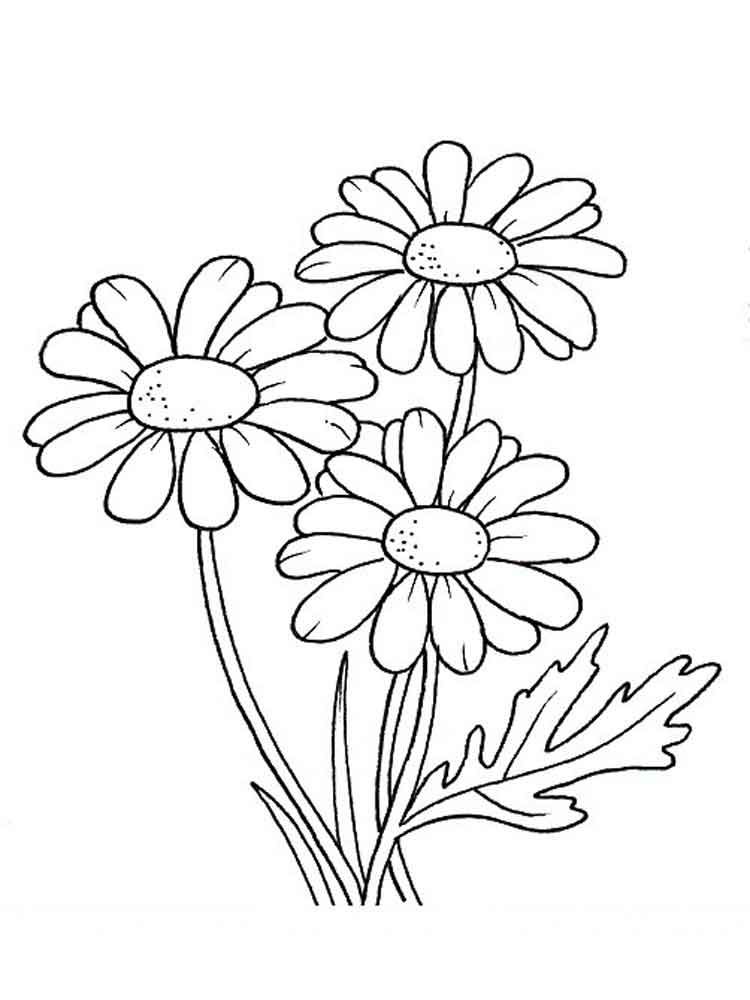 daisy coloring pages flower coloring pages coloring pages