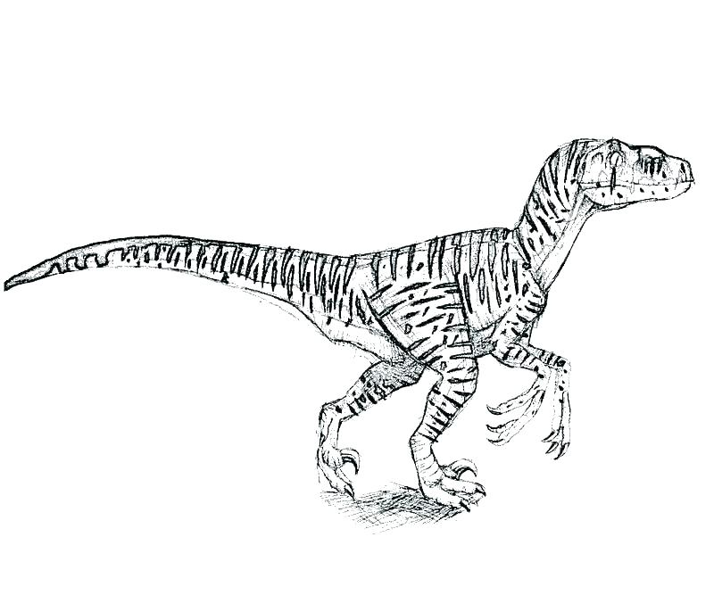 dilophosaurus coloring page lego jurassic world t rex pages