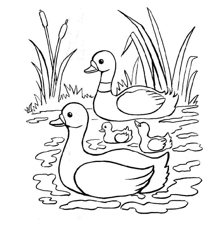ducks to color animal coloring pages kids coloring pages