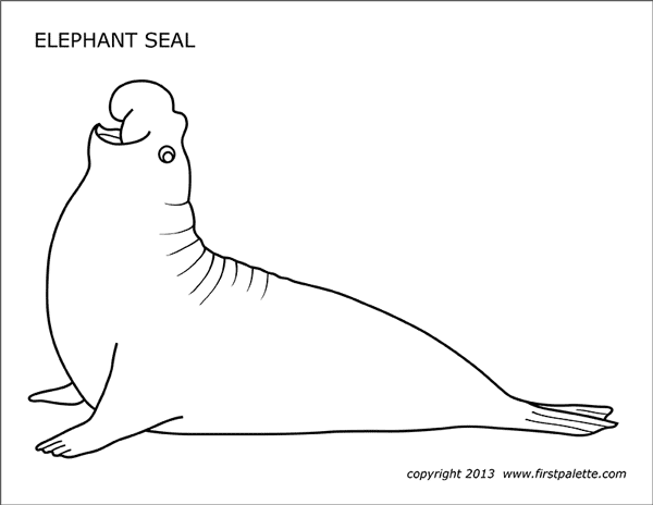 elephant seal free printable templates coloring pages