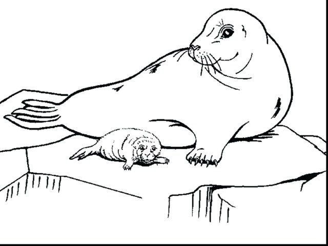 exclusive picture of seal coloring pages coloring pages