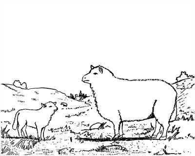 farm animal coloring pages 6