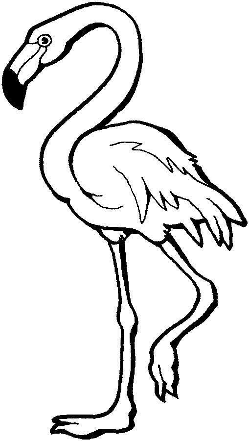 flamingo coloring page for kids free printable picture