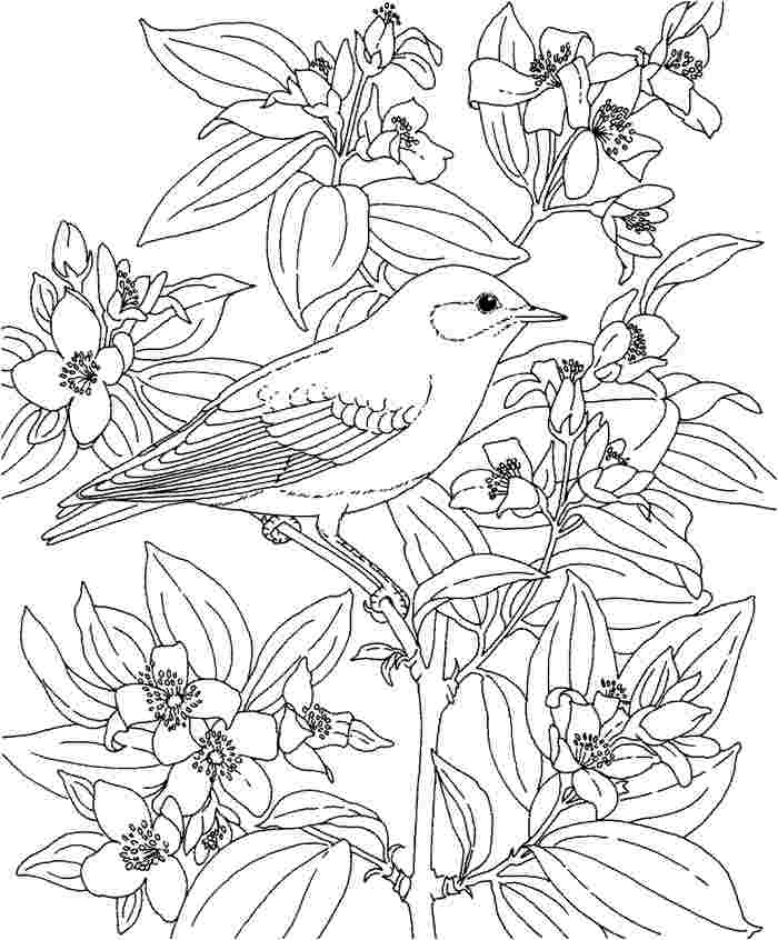 free coloring pages for hawaii download free clip art free