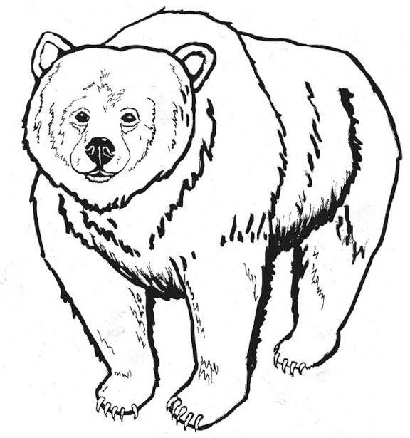 free printable bear coloring pages for kids malvorlagen