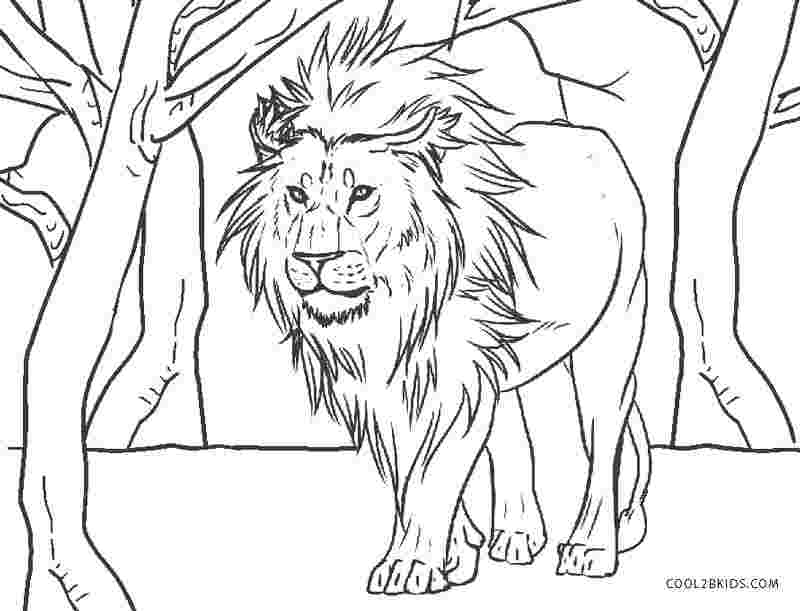 free printable coloring page lion animal coloring pages