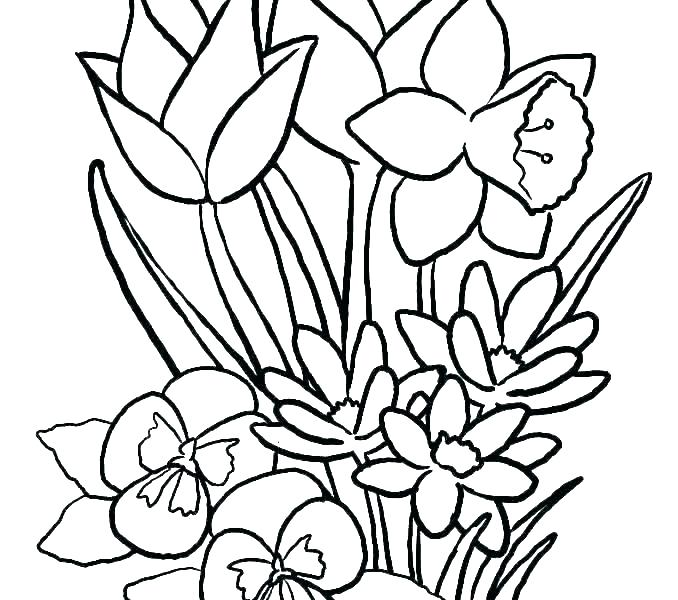 free printable coloring pages flowers beautiful with zamerpro