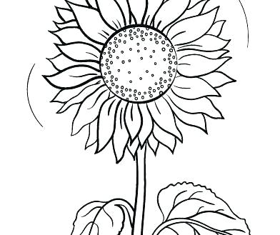 free printable coloring pictures of sunflowers pusat hobi