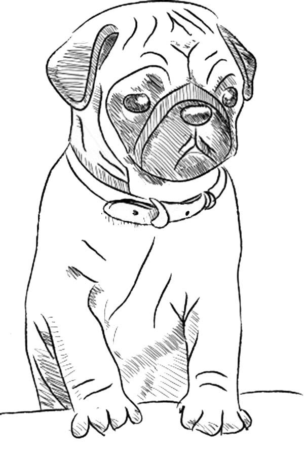 free printable drawing pages of cute pugs google search