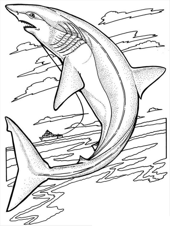free printable shark coloring pages for kids ausmalen