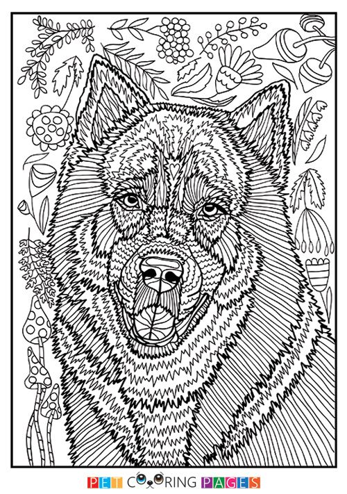 free printable siberian husky coloring page kyro available