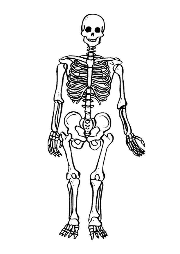 free skeleton pictures to color download free clip art