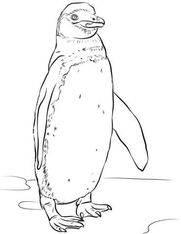 galapagos penguin coloring page free printable coloring pages