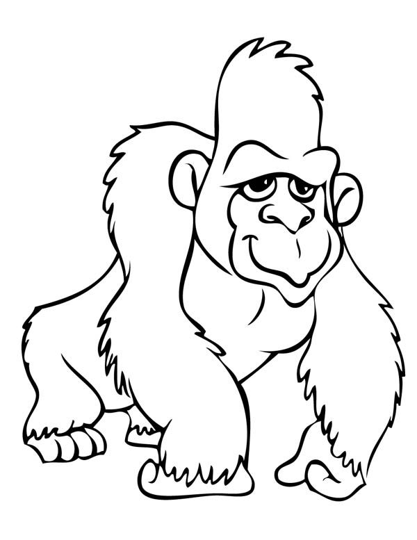 gorilla coloring page google animal coloring pages