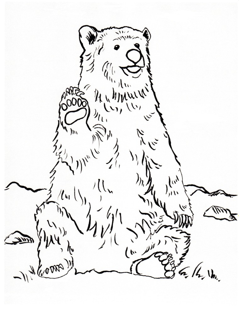 grizzly bear coloring page art starts for kids
