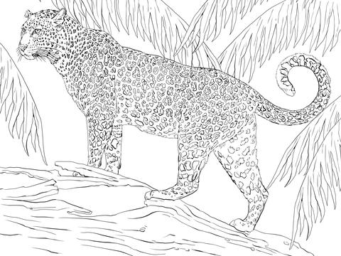 jaguar coloring page free printable coloring pages