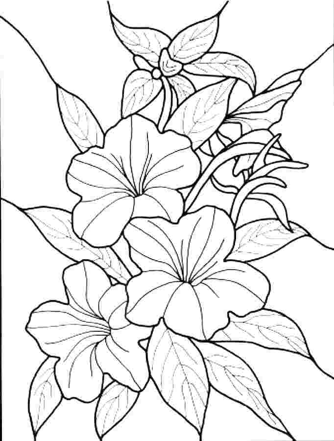 just coloring simple flower coloring pages pdf radioa