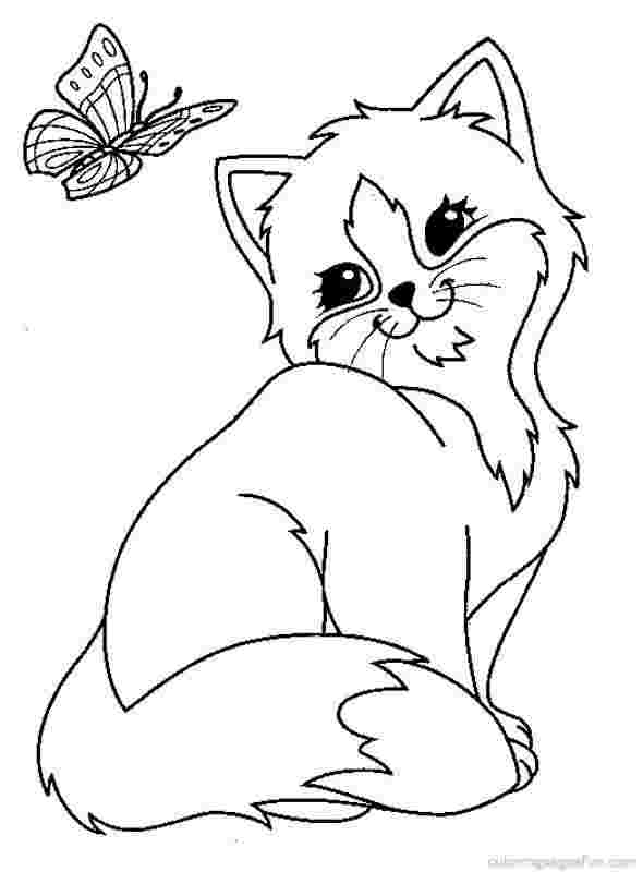 Cat to download : cat on pillow - Cats Kids Coloring Pages   800x590