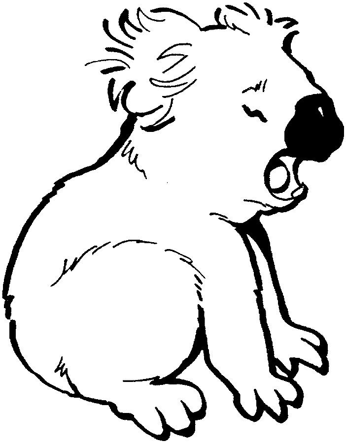 koala bear colouring page bear coloring pages cute