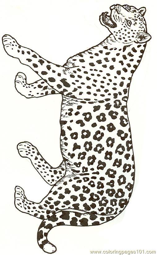 leopard coloring page free jaguar coloring pages