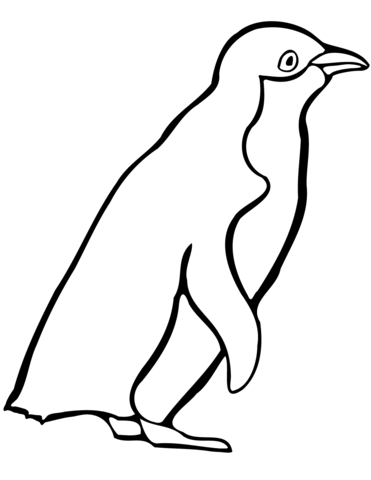 little blue penguin coloring page free printable coloring