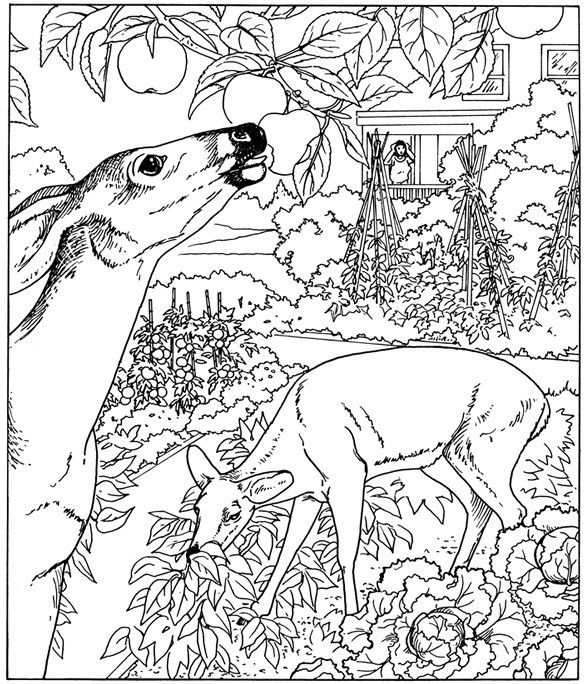 nature coloring pages for adults parts of a plant coloring