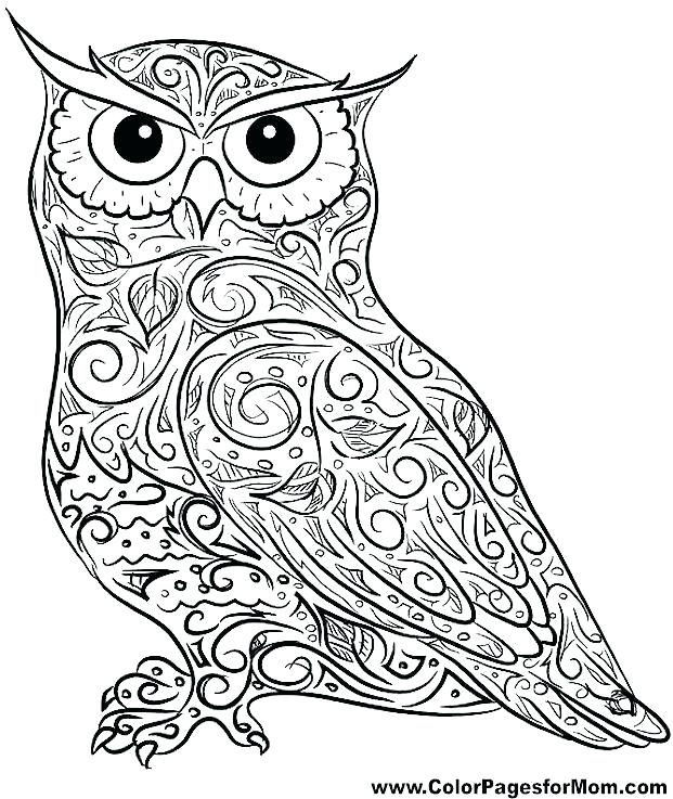 owl colouring pages for kids skyavico