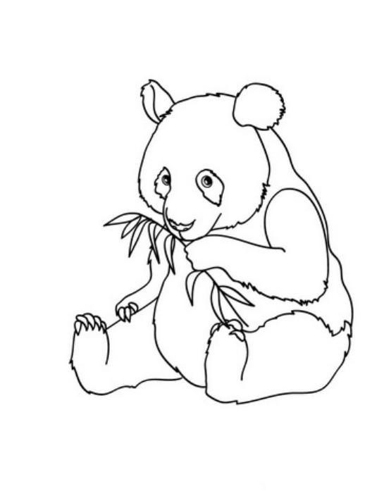 panda color page bear coloring pages panda coloring pages