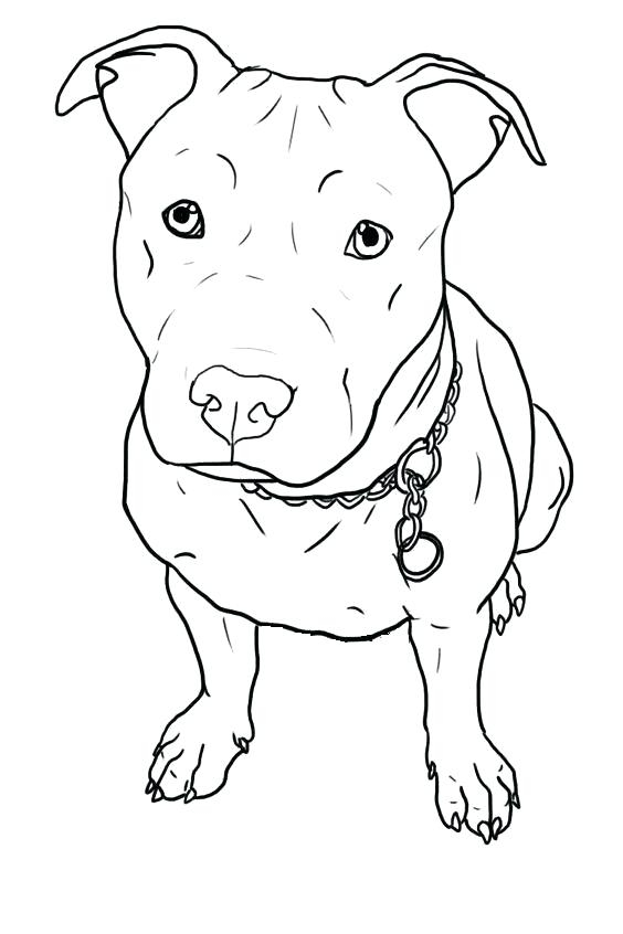 pitbull coloring pages at getdrawings free for