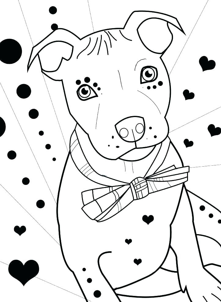 Pitbull Coloring Pages Ideas Whitesbelfast