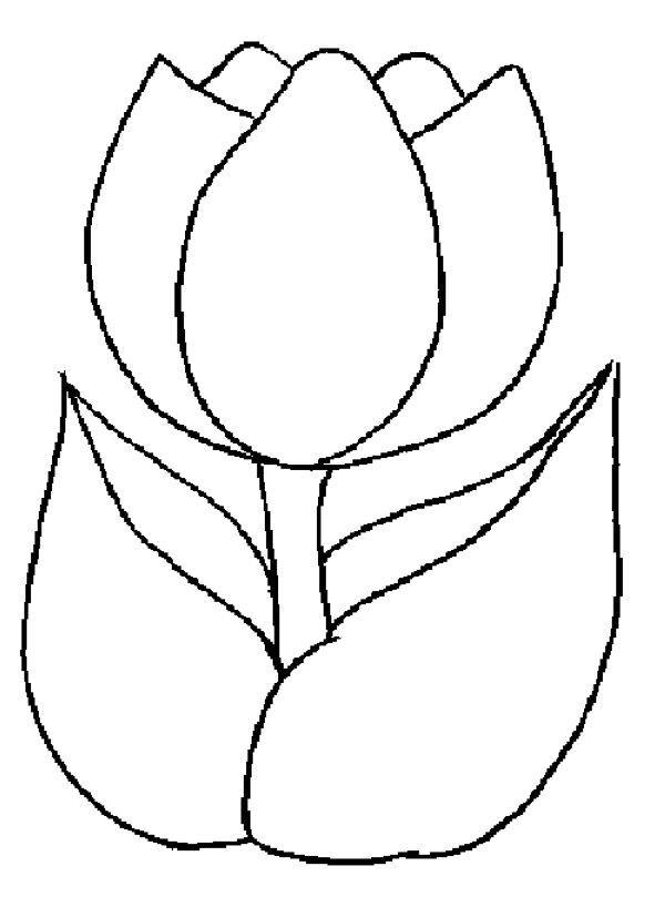 printable beautiful tulip coloring pages coloring pages
