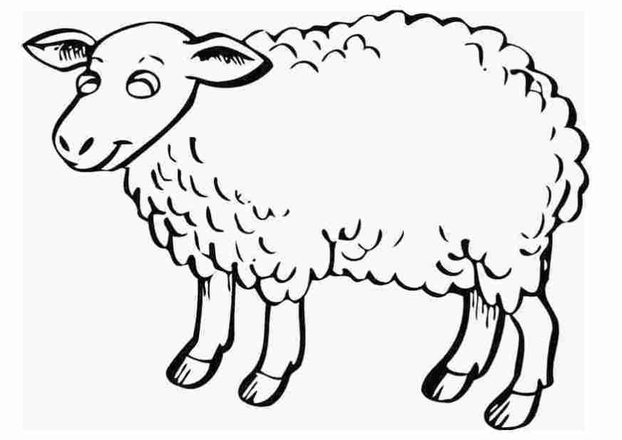 printable coloring page of sheep free printable sheep