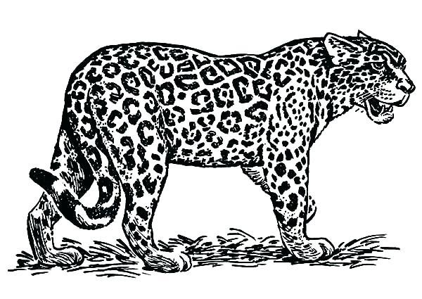 printable coloring pictures of jaguars pusat hobi