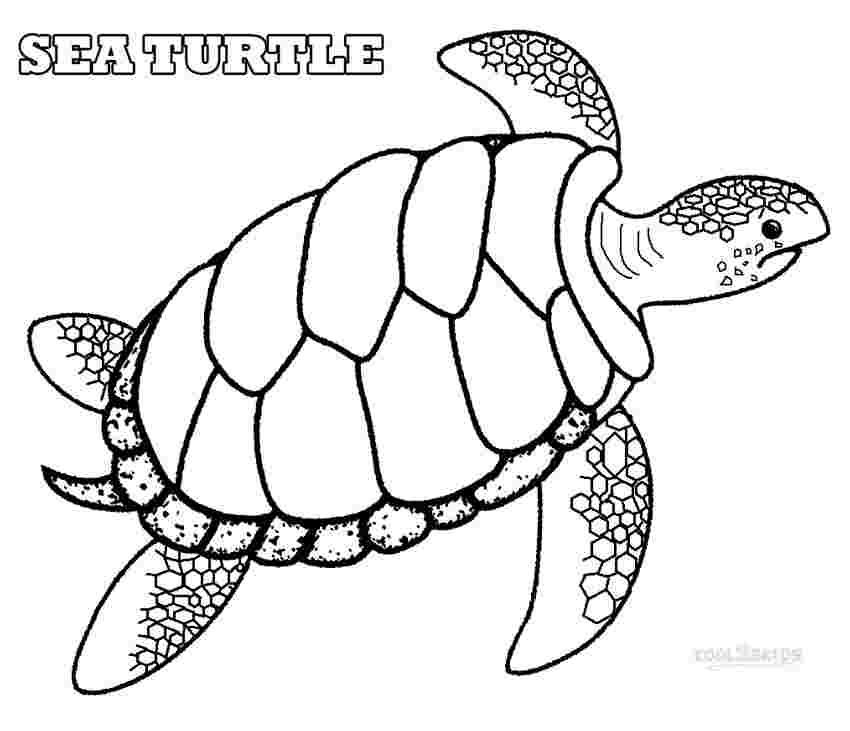 printable coloring pictures of turtles printable sea turtle