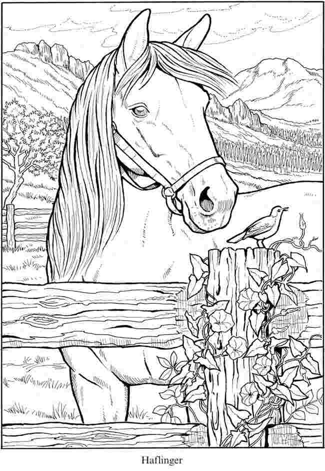 Coloring Pages Horses Collection - Whitesbelfast