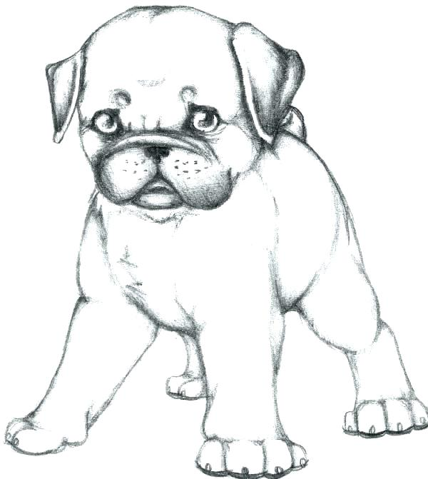 pug coloring pages at getdrawings free for personal