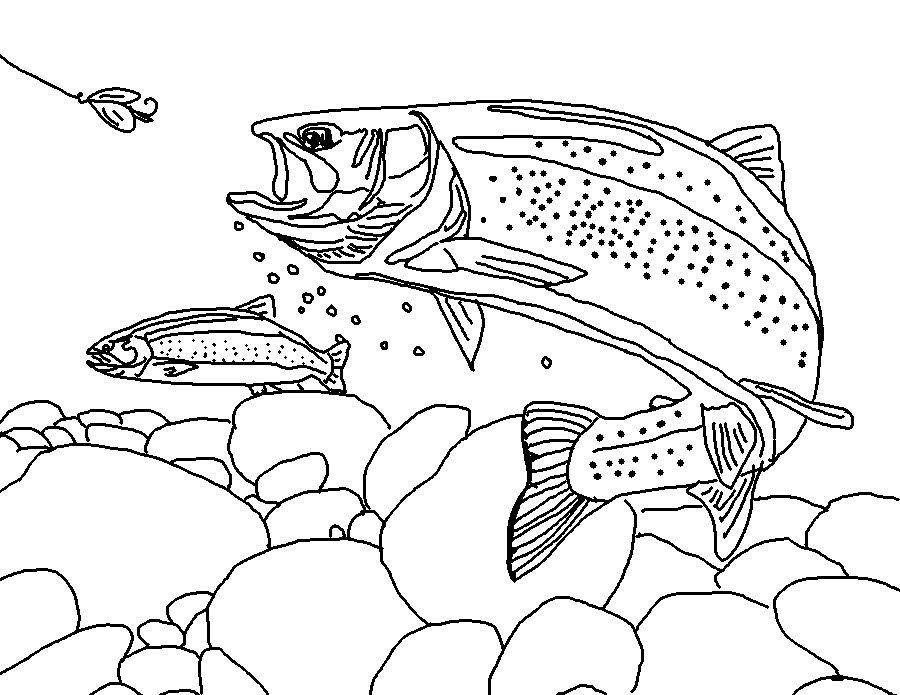 rainbow trout drawing template rainbow trout landscape