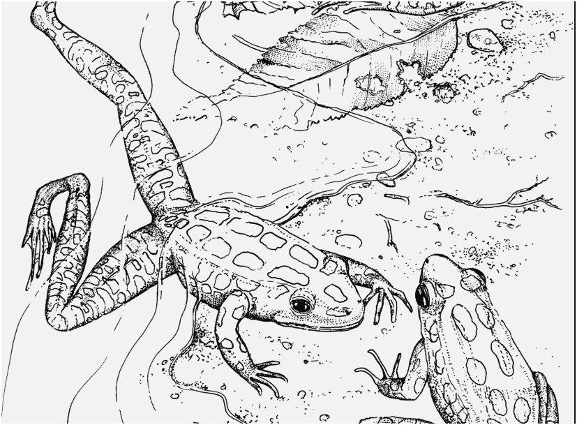 Rainforest Coloring Pages Ideas - Whitesbelfast