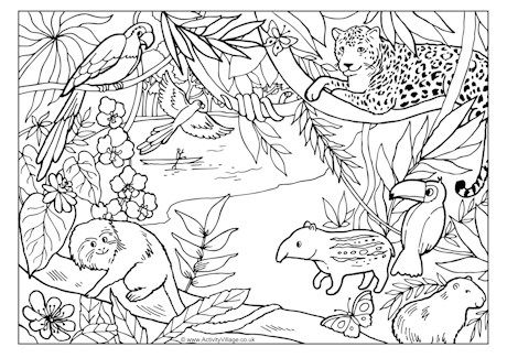 rainforest colouring page fantastic site lots of free